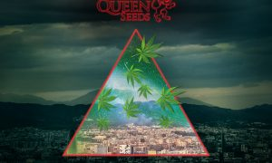 Win a trip to Spannabis Courtesy of Royal Queen Seeds
