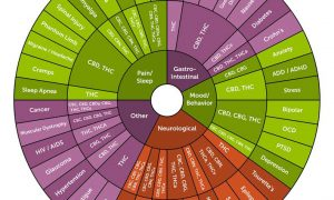 An introduction to Cannabinoids THC & CBD
