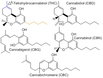 cannabinoids cannabis marijuana compounds
