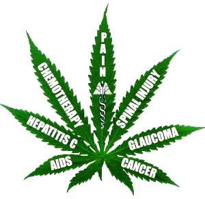 cannabis health