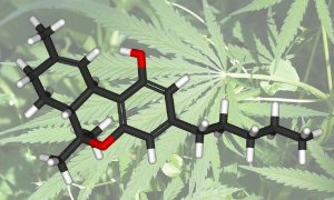 The Essential Guide To Cannabinoids