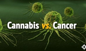 Help Crowdfund Cannabis & Cancer Research