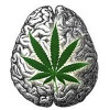 Cannabis reverses ageing processes in the brain