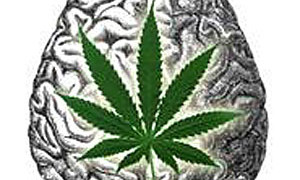 The cognitive effects of cannabis
