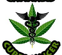 Cannabis does kill cancer cells – America admits