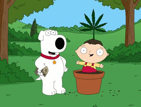 family guy marijuana cannabis legalise