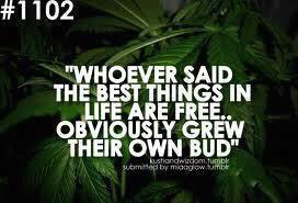 grow your own cannabis weed marijuana gyo meme