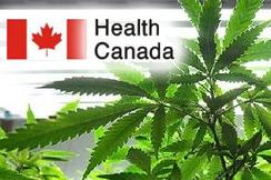 medical marijuana canada health