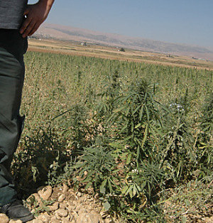 Lebanon Bekaa Valley hashish marijuana cannabis farmers