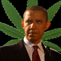 obama is a sellout marijuana
