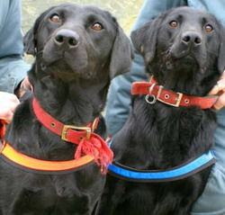 police sniffer dogs drugs school