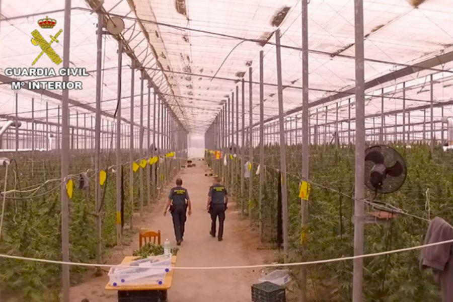 41,500 Cannabis Plants Seized in Southern Spain
