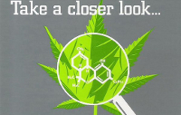 medical marijuana thc look closer science cannabis